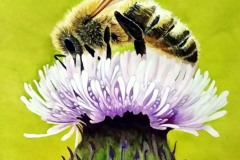 Bee-Thistle-no-celtic