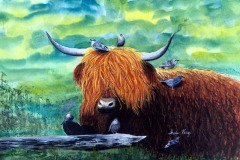 HIghland-Cow-Aschi-PMP
