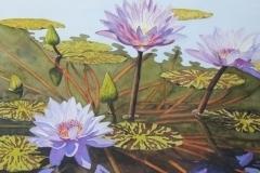 thumbs_Blue-Sapphire-Lilies-Steve-Lackore