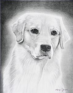 Graphite Drawing by Mary Johnson